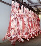 Мясо говядина бык (охл.)